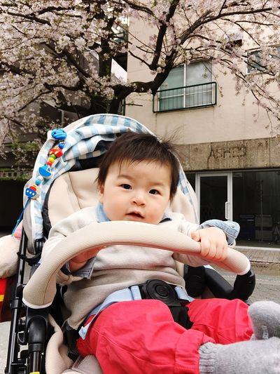 cherry blossom and my son🌸👶🏻 Cherry Blossoms Japanese Cherry Blossoms Looking At Camera Childhood Babyhood Sitting Baby Cute Innocence Toddler  Mysweetbaby