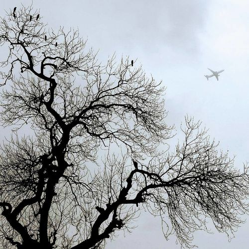 Air Vehicle Airplane Animal Themes Bare Tree Bird Branch Day Flying Low Angle View Mid-air Nature No People Outdoors Sky Tree