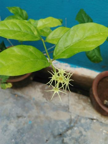 Growth Plant Leaf Green Color Nature Close-up No People Day Outdoors Fragility Beauty In Nature Freshness Be Brave
