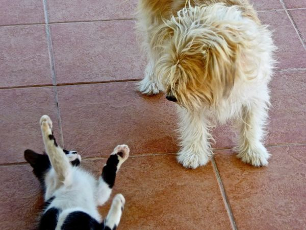Cat Cats Dog Dogs Cat And Dog Playing Black And White Cat White Dog Blackandwhitecat Kitten Cute Cute Pets