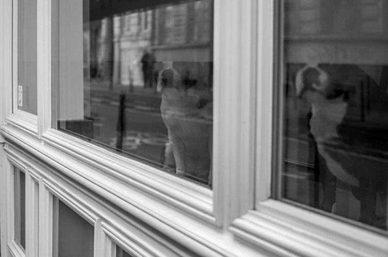 Blackandwhite Bulldog Dogs Glass Perspective Reflection Streetphotography Window