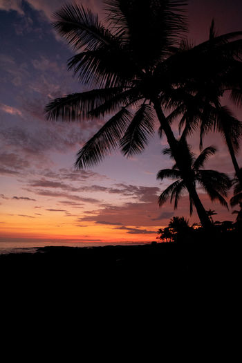 Silhouette Sunset Sky Palm Tree Beauty In Nature Tree Tropical Climate Tranquility Tranquil Scene Plant Scenics - Nature Nature Cloud - Sky No People Orange Color Growth Idyllic Outdoors Dark Non-urban Scene Coconut Palm Tree Palm Leaf Hawaii EyeEmNewHere