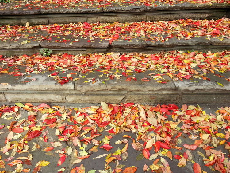 Autumn Backgrounds Fall Fall Color Fall Colours Leaves No People Orange Color Outdoors Red Steps Stone Yellow