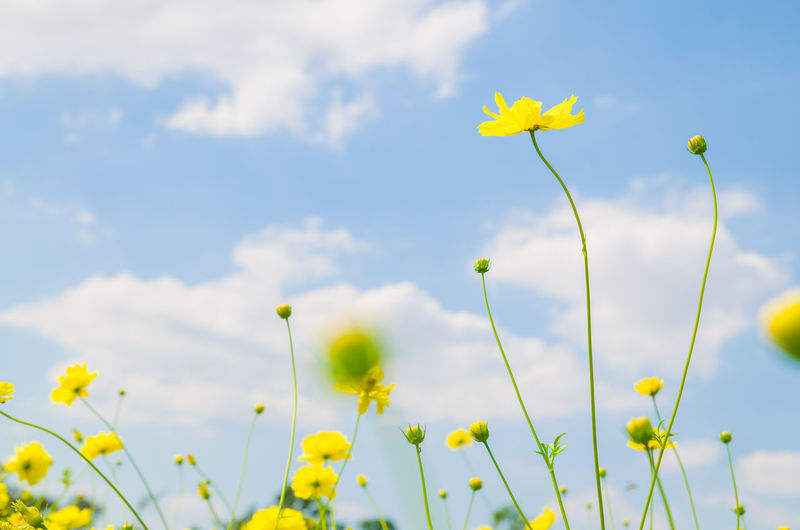 Close-up of flowers against the sky