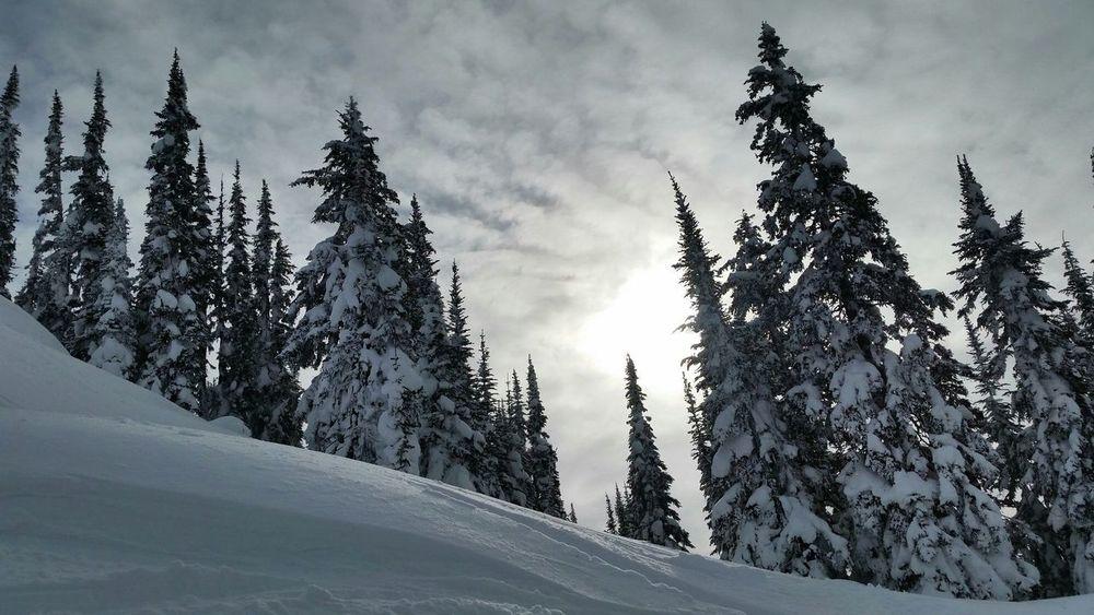 Love My Ski Hill Revelstoke Wintertime Treesking Freeskiing Revelstokemountainresort Volkl Ski Mothernature