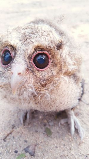 EyeEm Selects Bird Portrait Sand Looking At Camera Close-up
