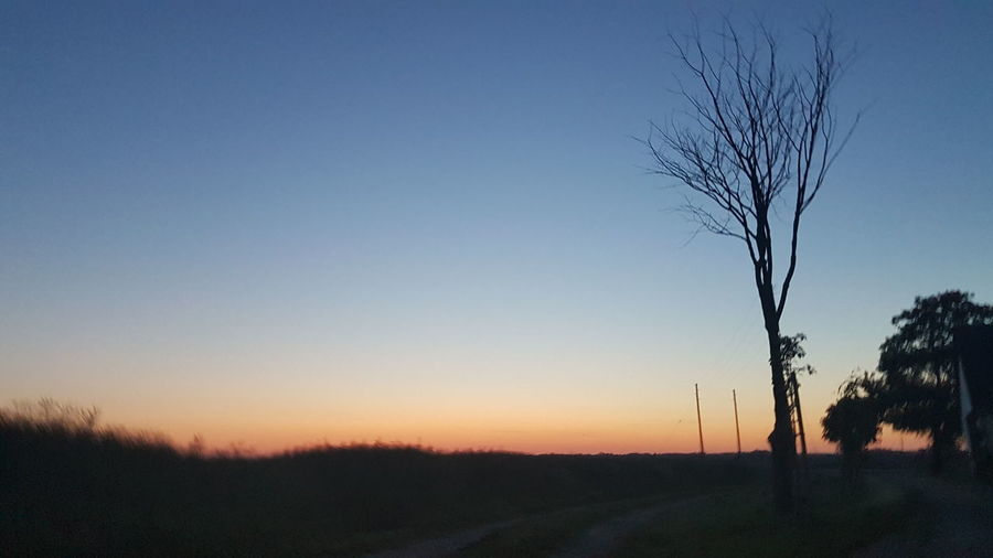 Silhouette bare tree on field against clear sky during sunset