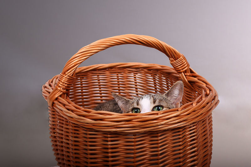 Close-up of kitten in wicker basket against gray background