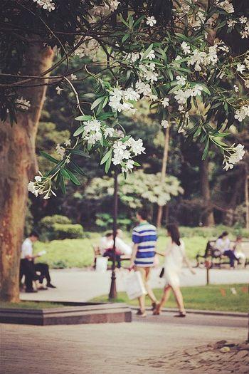 Tree Flowers OpenEdit Park Spring Shanghai EyeEm Nature Lover Enjoying Life People Here is the Zhongshan Park of Shanghai.