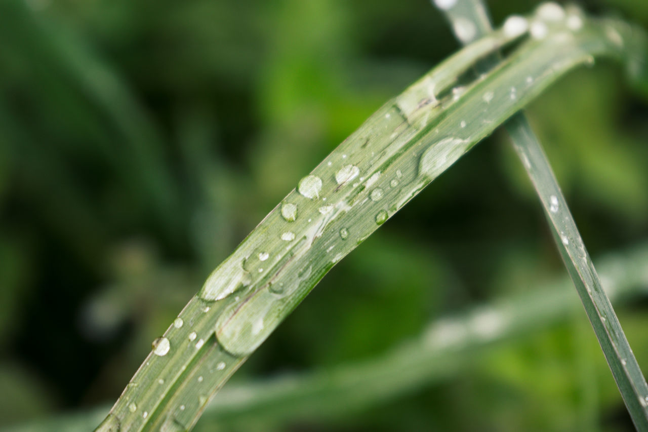 drop, water, wet, focus on foreground, rain, nature, green color, raindrop, droplet, freshness, water drop, purity, close-up, no people, growth, outdoors, day, beauty in nature, grass, dripping, leaf, fragility