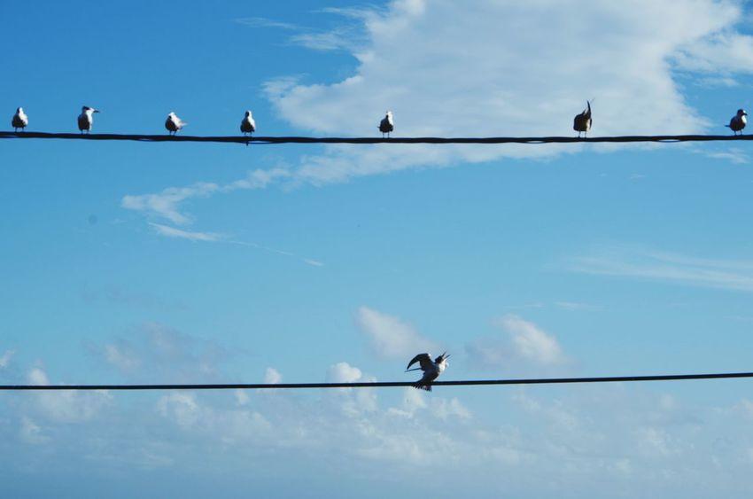 Bird Animal Wildlife Cloud - Sky Sky Animal Themes Perching No People