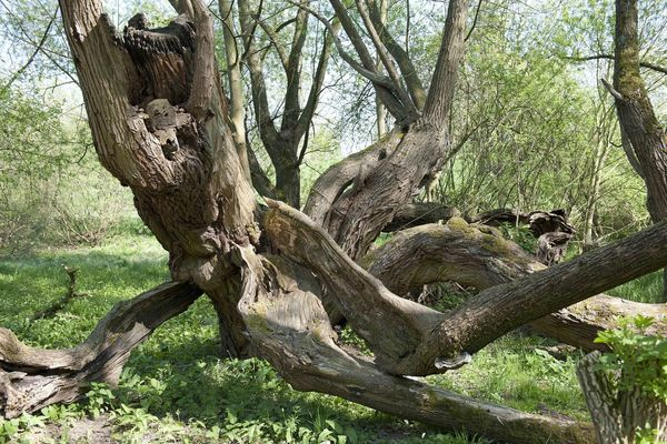 Bare Tree Beauty In Nature Forest Landscape Nature Outdoors Tree Tree Trunk