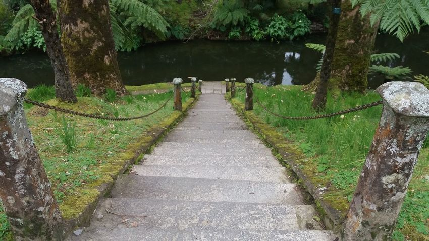 Nearby Furnas @ Azores (S. Miguel) Azores Azores Islands Azores Beauty Botanic Garden Excotic Furnas Furnas(Azoren) Azores, S. Miguel Beauty In Nature Botanic Day Garden Grass Growth Nature No People Outdoors Plant Scenics The Way Forward Tranquil Scene Tranquility Tree Tree Trunk Walkway Water