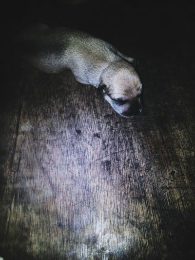 New born puppy :3