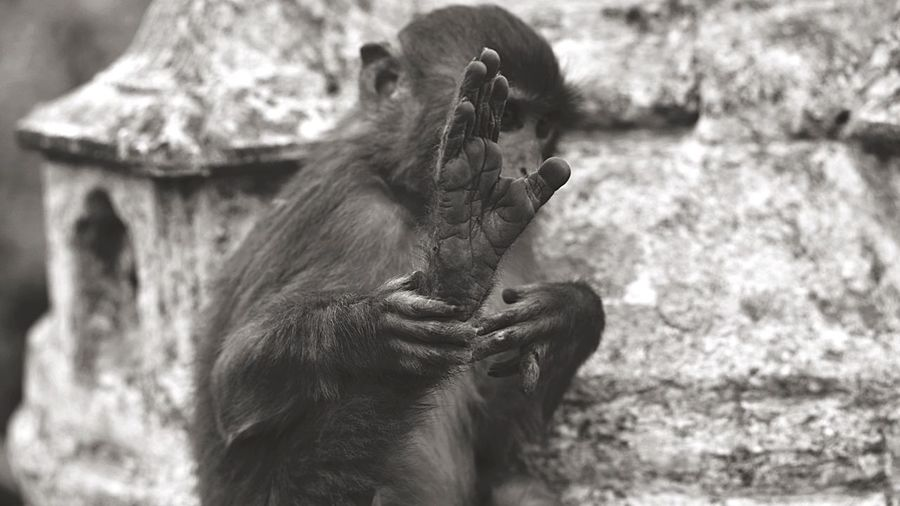 Monkey leaning against stone structure