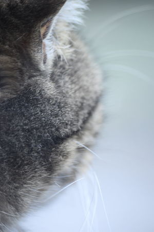 Close-up No People Day Outdoors Water Backgrounds Chrixxo Cat Winter Abstract Hair Animal Art Beauty In Nature