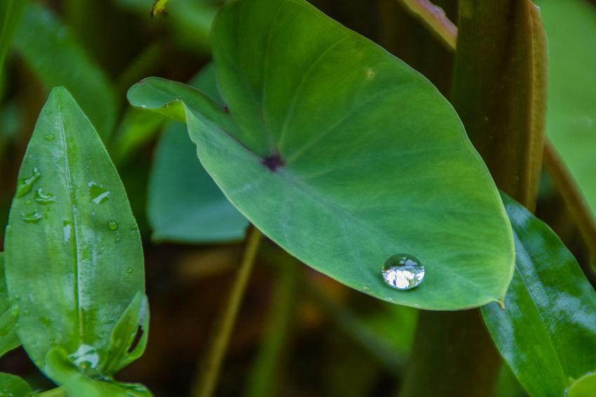 RainDrop Raindrops