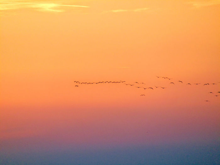 Birds flying in the sky during sunset