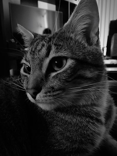 What r U thinking? Domestic Cat Pets Indoors  Close-up Portrait Tranquility Love Taking Photos Zen Life Showcase April Eyeem Market EyeEm Best Shots First Eyeem Photo Best Eyeem Pics EyeEm Best Shots - Black + White B&W Portrait Black And White Art In Everything
