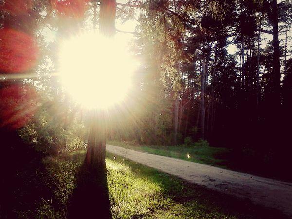 Landscape Forest Sun Behind Tree