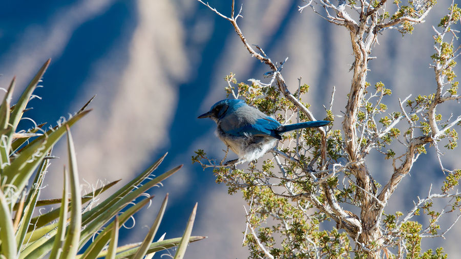 Curious Bird Bird Vertebrate Plant Animal Themes Animal Animal Wildlife One Animal Animals In The Wild Branch Tree Perching No People Nature Beauty In Nature Day Growth Focus On Foreground Blue Selective Focus Close-up Outdoors