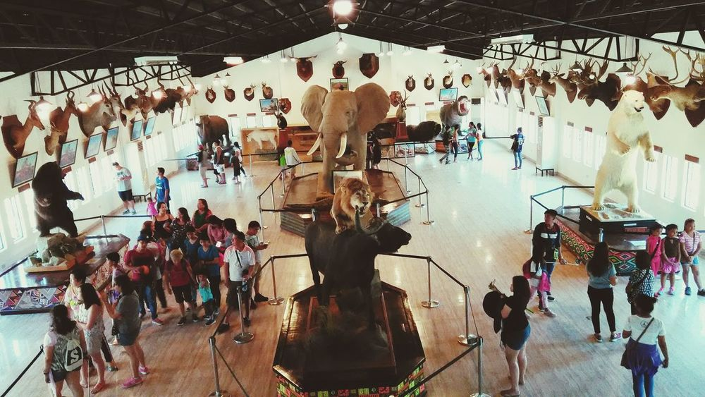 Large Group Of People Indoors  Built Structure Illuminated Hanging Women People Crowd Men Day Architecture Adult Adults Only High Angle Architecture High Angle View Zoo Philippines Baluarte, IlocosSur, Philippines Vigan, Ilocos Sur Vigan City Safari Gallery Animals Safari Animals