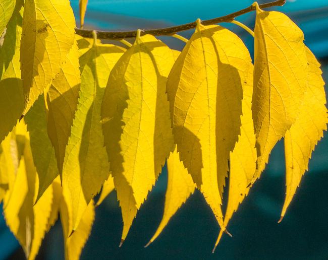 AutumnEyeEmbests
