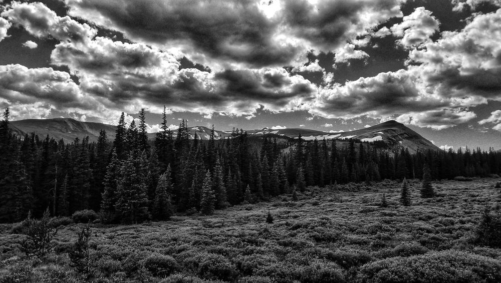 black and white back yard Colorado Photography Landscape_photography Alma Mosquito Range 11k Murica Merica Valley Of The Sun America Blackandwhite Photography Black And White Landscape Cloud - Sky Nature Sky Beauty In Nature Scenics No People Growth Outdoors Tree Tranquility Day Freshness EyeEmNewHere
