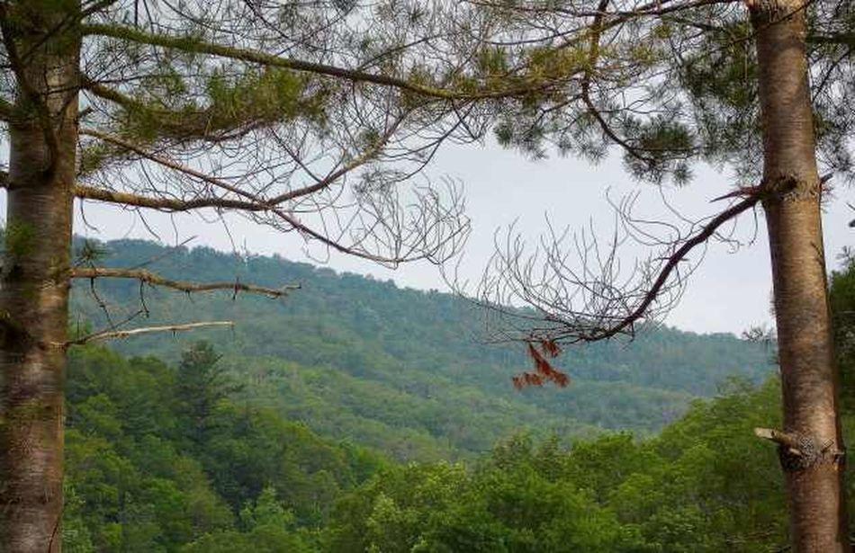 Nature_collection Blue Ridge Mountains Nikon L810 Road Trippin It!