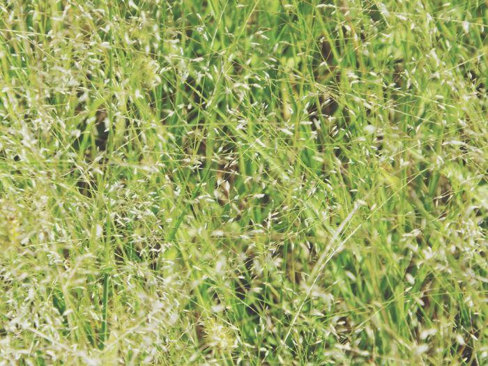 Full frame shot of green leaves on field