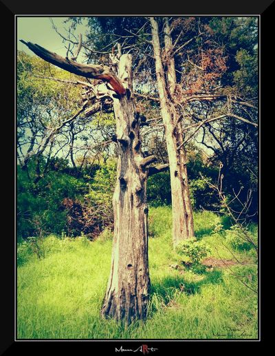 Tronco Arboles Arboles , Naturaleza Arbol. ArbolSeco Mi Arbol Favorito Trees Tree_collection  Tree Treescollection Tree Trunk
