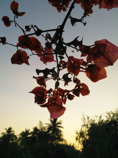 Flowers of India Nature Flowers 🌸🌸🌸 Shade Dawn