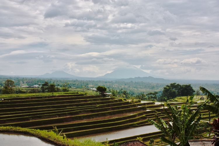 Bali, Indonesia EyeEm Nature Lover Eyeem Bali Jatiluwih Rice Terrace Rice Paddy Agriculture Baliphotography Beauty In Nature Day Field Landscape Nature Outdoors Rice Field Rice Terraces Scenics Sky