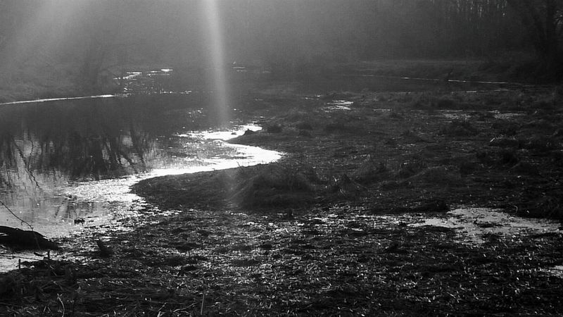 A Sunbeam of Hope... warmimg the ground bringing Spring to life...this ray of light was so brightly pronouce I stop dead on the road and shot this!! Sunlight Bw_friday_challenge Water Reflections Landscape_Collection Melancholic Landscapes Black And White EyeEm Nature Lover From My Point Of View For My Friends That Connect Rule Of Thirds