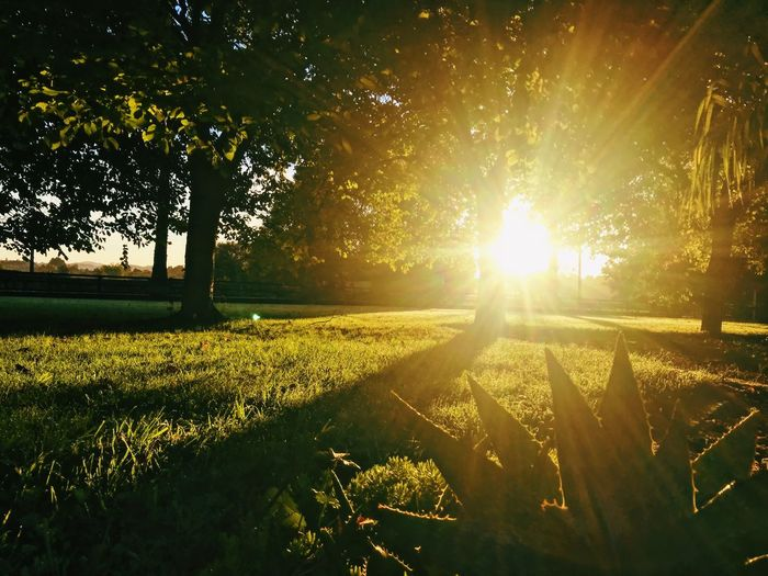 Beauty In Nature Day Field Grass Growth Landscape Lens Flare Nature No People Outdoors Scenics Sky Sun Sunbeam Sunlight Tranquil Scene Tranquility Tree