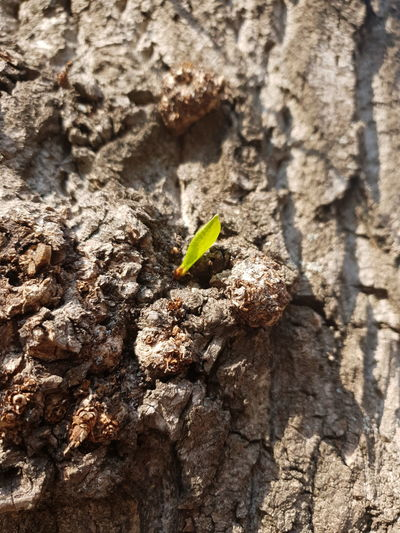Close-up of small plant growing on tree trunk