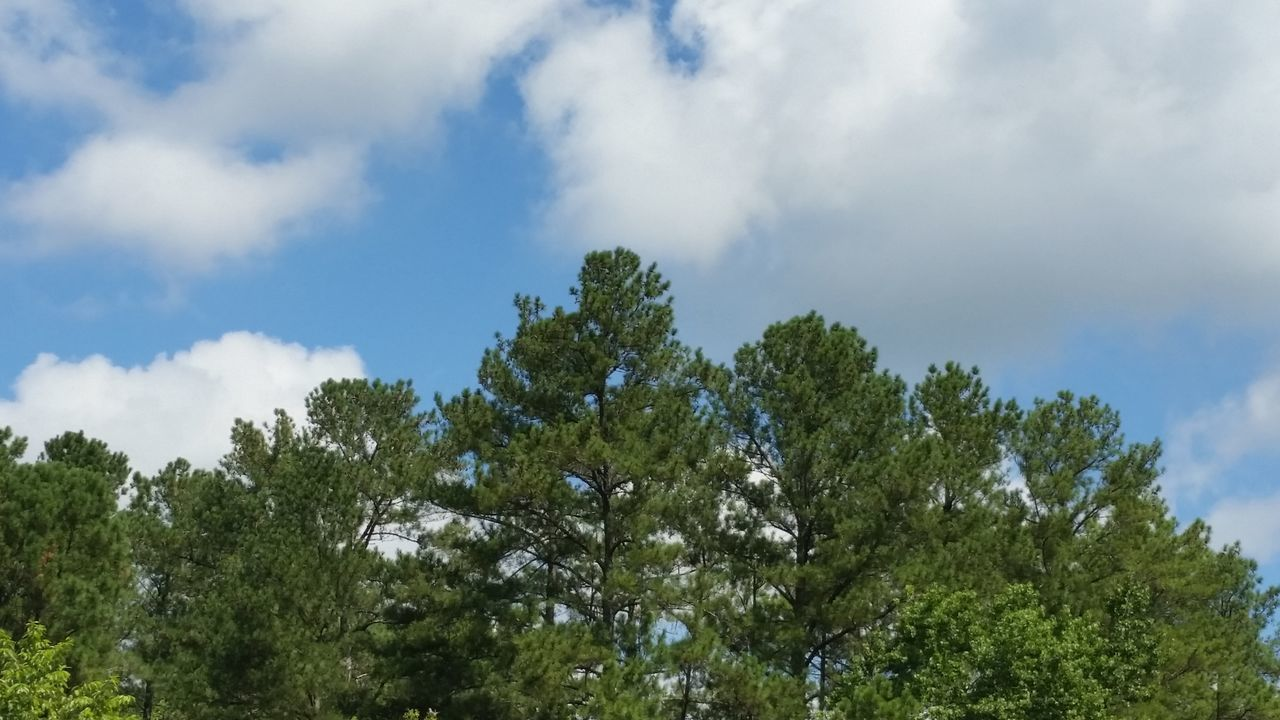 tree, low angle view, nature, sky, growth, day, cloud - sky, beauty in nature, no people, outdoors, scenics, freshness