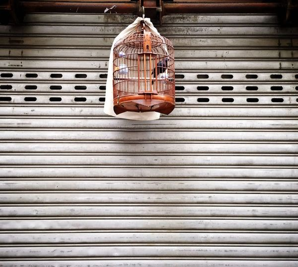 Bird In A Cage Singbird Hanging Birdcage Hong Kong Hong Kong Culture Discoverhongkong Chinese Birdcage Adapted To The City