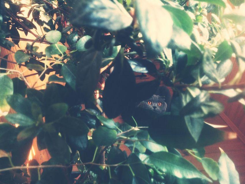 Cat Potrait Animals Model my love♥