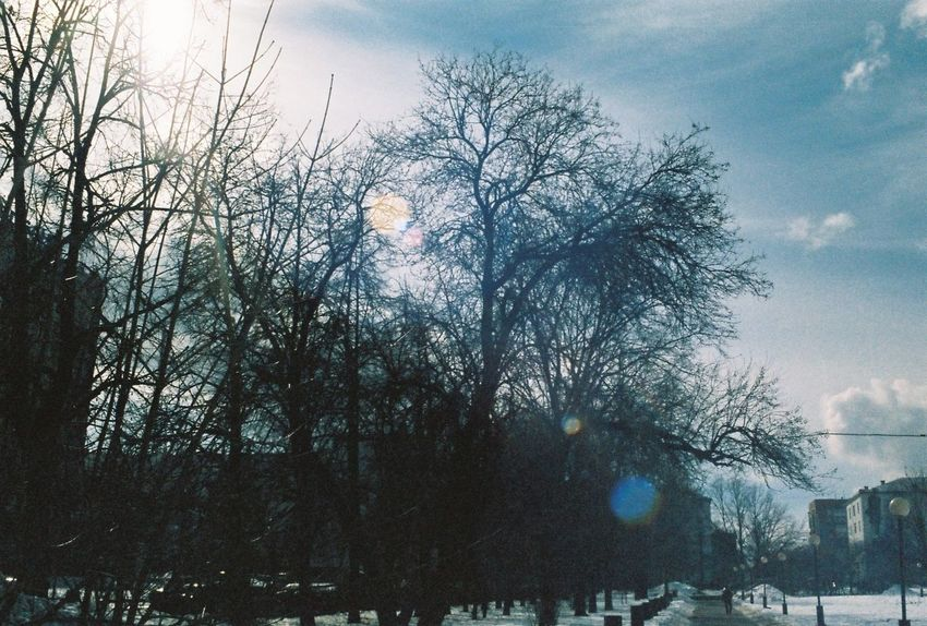 35mm Bare Tree Beauty In Nature Branch City Cloud Cloud - Sky Cloudy Day Growth Nature No People Outdoors Scenics Season  Sky Tranquil Scene Tranquility Tree Tree Trunk Weather