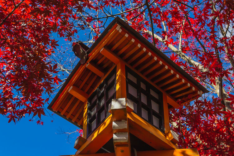 Autumn EyeEmNewHere Japan Lantern Travel Autumn Blue Branch Built Structure Change Day Growth Lamp Low Angle View Nature No People Orange Color Outdoors Plant Sky Travel Destinations Tree Wood - Material