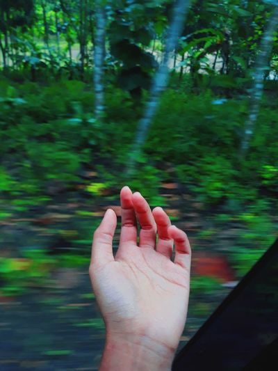 Cropped image of person hand against plants