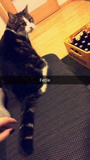 Baby Pets Cat Indoors  Hauptsachebier Babycat Fettsack Lovehim Liebe Fun Love Bubu 🎀😽🌸✨