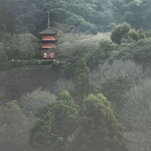 Low Angle View Of Kiyomizu-Dera Amidst Trees On Mountain
