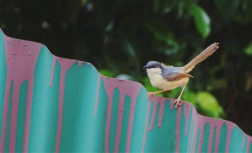 India New Delhi Little Bird Black Bird Perching Fast Birds Indian Birds