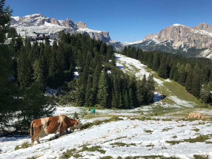 Dolomites, Italy Snow Mountain Cold Temperature Beauty In Nature Scenics - Nature Day No People