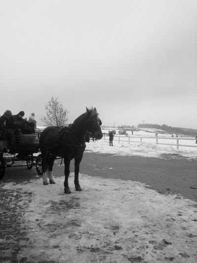 Horse Carriage Winter My Beloved Place Stable Horse Carriage Winter Holidays Black And White Blackandwhite Black & White