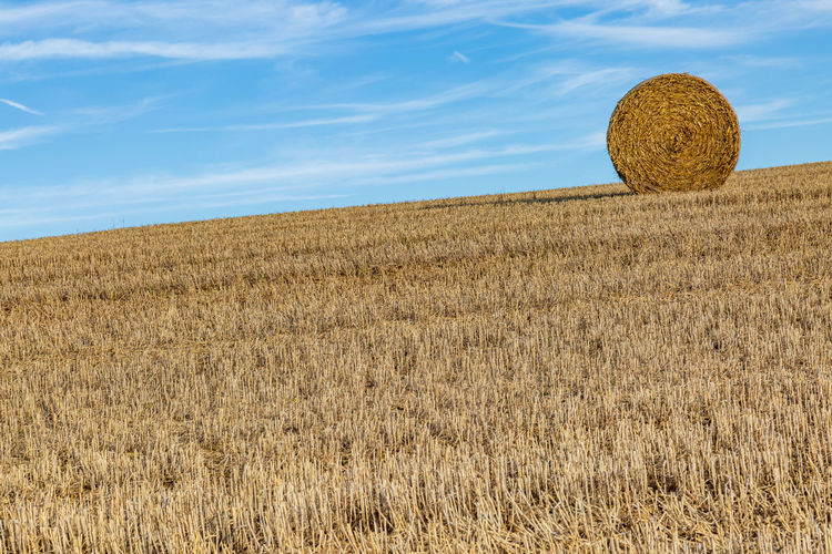 A Hay Bale in the Sussex countryside Hay Bale Agriculture Bale  Beauty In Nature Brown Cloud - Sky Countryside Environment Farm Field Harvest Hay Horizon Over Land Land Landscape Nature No People Outdoors Plant Rural Scene Scenics - Nature Sky Sussex Tranquil Scene Tranquility