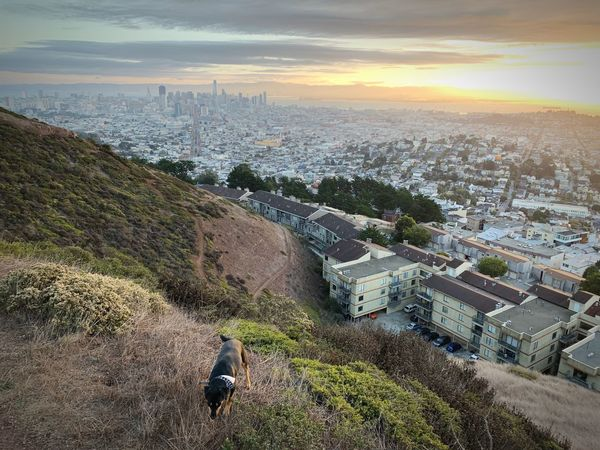 Walking the dog at sunrise on top of Twin Peaks, San Francisco Dog Architecture Building Exterior High Angle View City Built Structure Sky Cityscape Nature Sunlight Day Outdoors Beauty In Nature Residential District Landscape