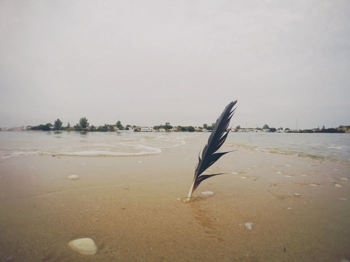Feather, beach,